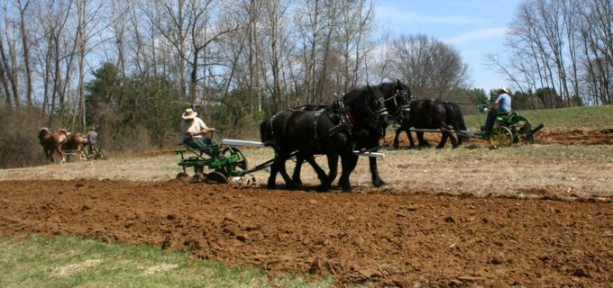Coomunity Gardens preparation by Horse drawn plows