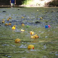 Annual Rubber Duck race down the Scantic