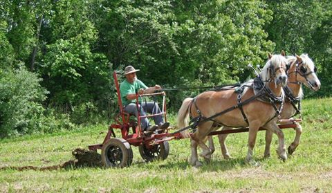 Community Gardens being Horse Plowed By Jim Strempfer