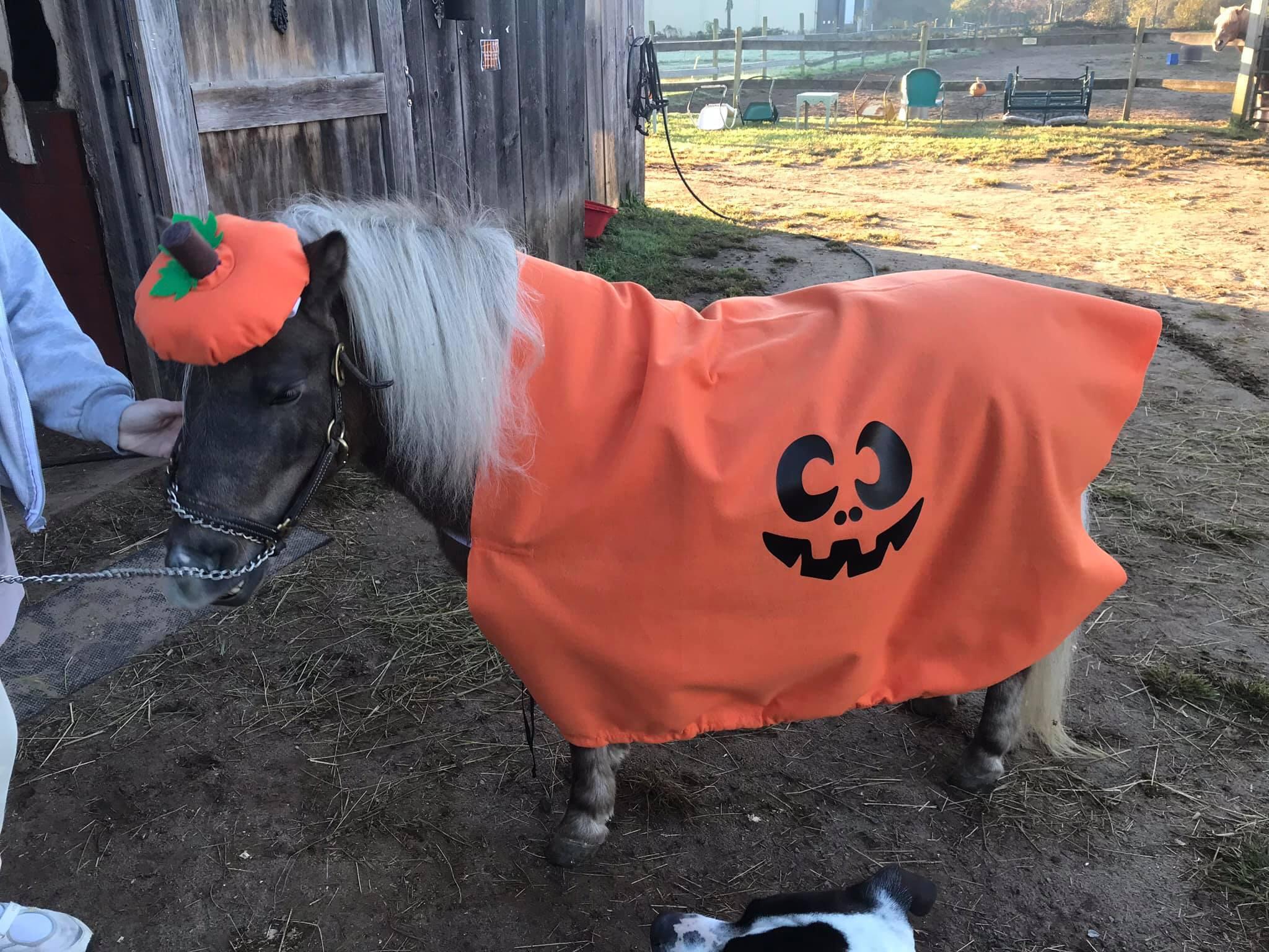 Shag Bark's Annual Halloween Event @ Shag Bark Hickory Farm